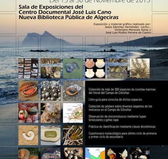 EXPOSICION DE CONCHAS MARINAS DEL CAMPO DE GIBRALTAR
