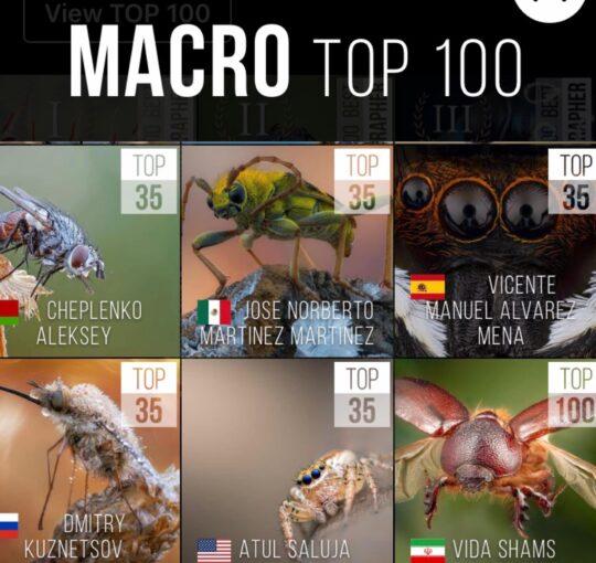 MACRO TOP 100